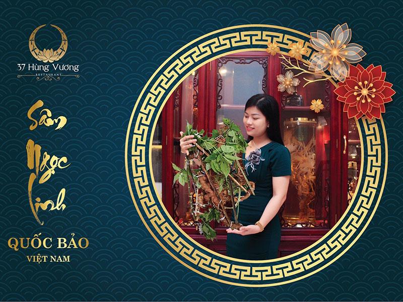 Sâm Ngọc Linh – Món quà sức khỏe từ 37 Hùng Vương