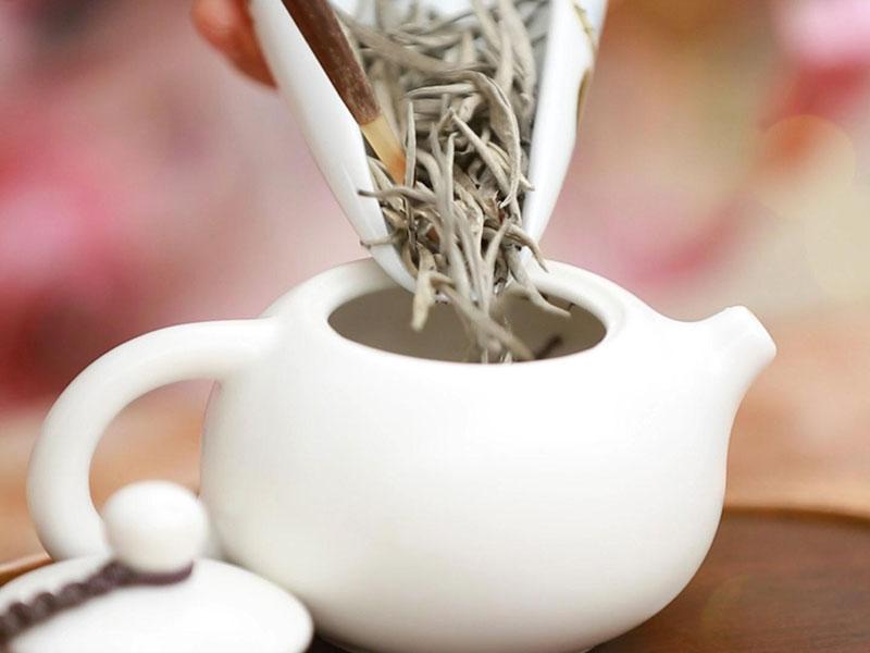 Bạch trà và công dụng của bạch trà