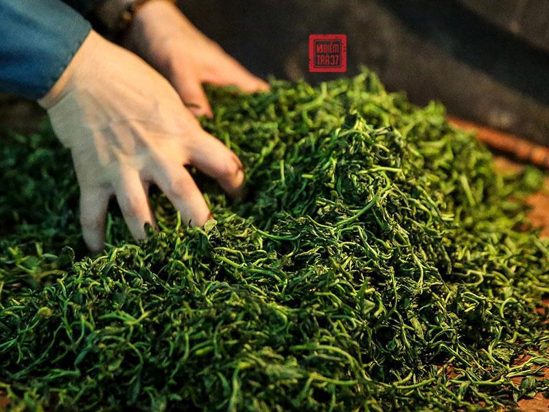 Để có được bánh trà Phổ Nhĩ có giá trị cao, đòi hỏi quy trình chế biến tỉ mỉ và kỳ công