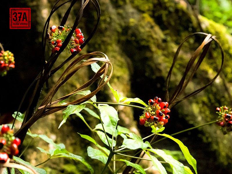 Tinh hoa đến từ núi rừng Đại ngàn